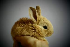 Image for International Rabbit Day