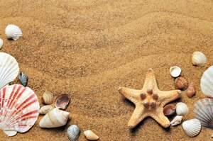 Image for National Seashell Day
