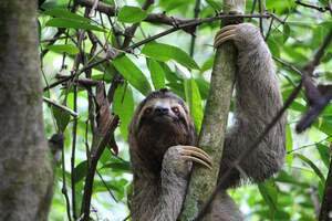 Image for International Sloth Day