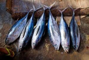 Image for World Tuna Day