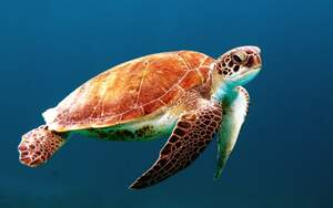 Image for World Turtle Day