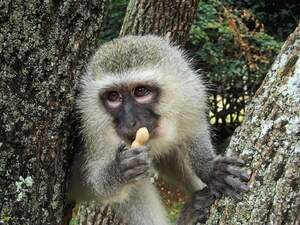 Image for Take a Monkey to Lunch Day